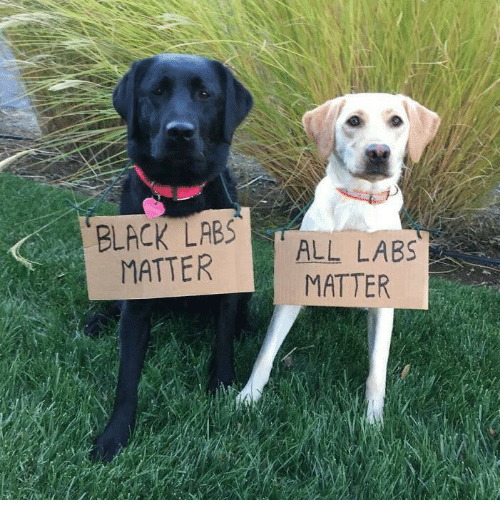 25 best memes about black labs matter black labs matter memes. Black Bedroom Furniture Sets. Home Design Ideas