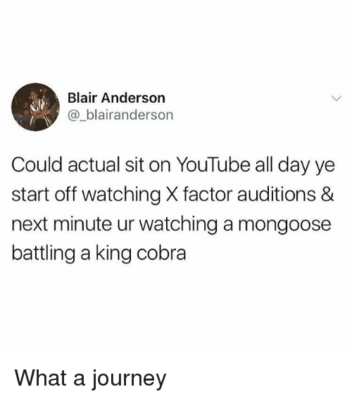 Journey, Memes, and youtube.com: Blair Anderson  @_blairanderson  Could actual sit on YouTube all day ye  start off watching X factor auditions &  next minute ur watching a mongoose  battling a king cobra What a journey