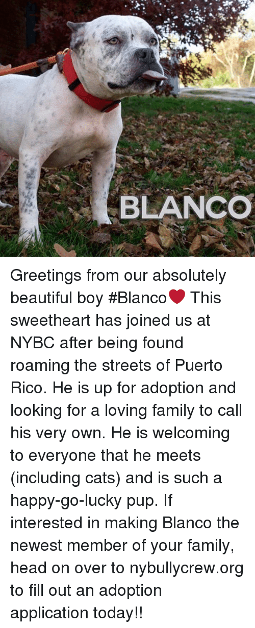Blanco greetings from our absolutely beautiful boy blanco this memes puerto rico and blanco greetings from our absolutely beautiful boy m4hsunfo