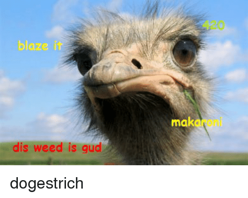 Funny, Weed, and Blaze: blaze it dis weed is gud mak dogestrich