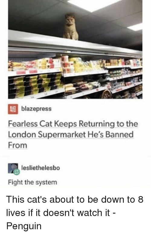 Blazepress Fearless Cat Keeps Returning To The London Supermarket - Fearless cat keeps returning to the london supermarket hes banned from