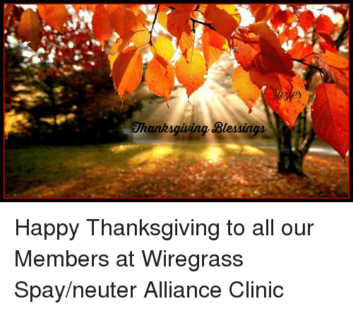 blessings thanksgiving happy thanksgiving to all our members at wiregrass 9740852 blessings thanksgiving happy thanksgiving to all our members at