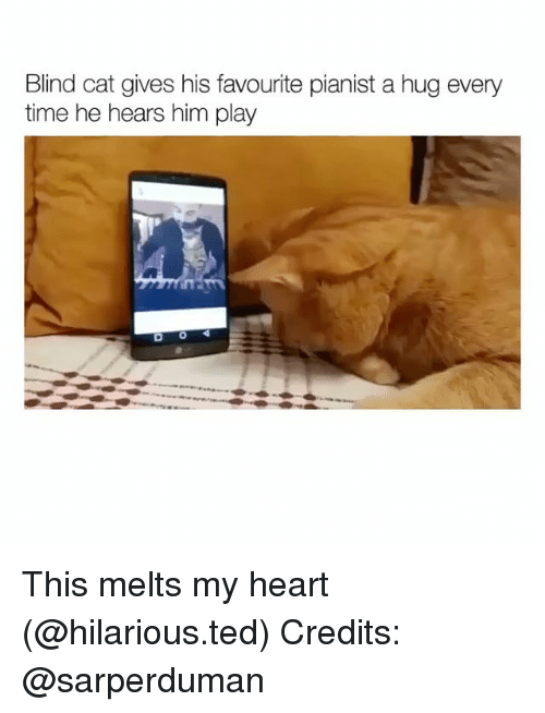 Funny, Ted, and Heart: Blind cat gives his favourite pianist a hug every  time he hears him play This melts my heart (@hilarious.ted) Credits: @sarperduman
