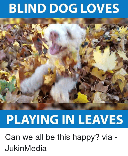 Memes, 🤖, and Blinds: BLIND DOG LOVES  PLAYING IN LEAVES Can we all be this happy? via - JukinMedia