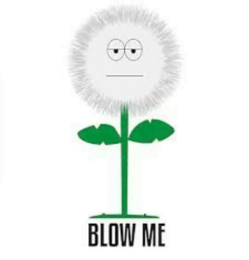 Girl Memes and Blowing-Me: BLOW ME