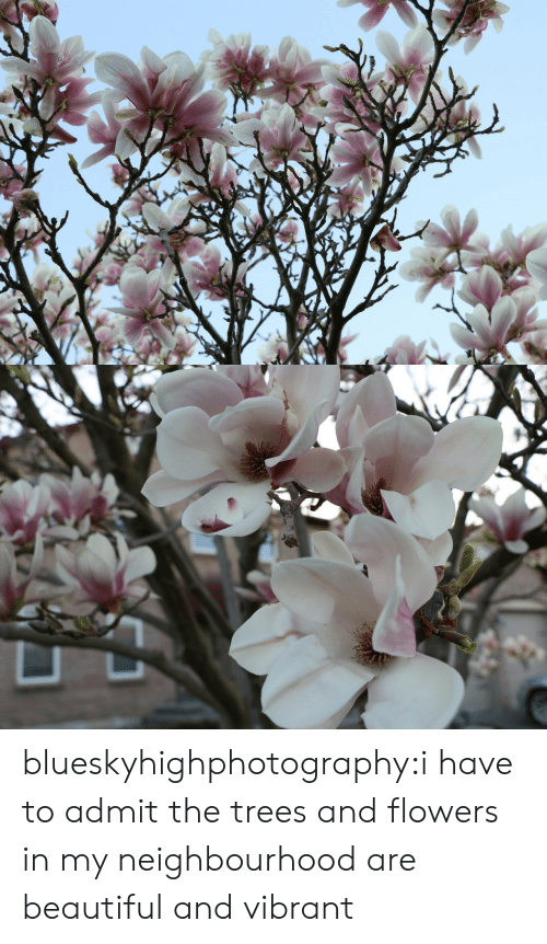 Beautiful, Tumblr, and Blog: blueskyhighphotography:i have to admit the trees and flowers in my neighbourhood are beautiful and vibrant
