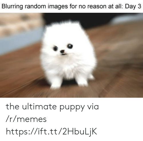 Memes, Images, and Puppy: Blurring random images for no reason at all: Day 3 the ultimate puppy via /r/memes https://ift.tt/2HbuLjK
