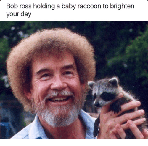 Bob ross holding a baby raccoon to brighten your day bob ross bob ross raccoon and baby bob ross holding a baby raccoon to brighten voltagebd Gallery