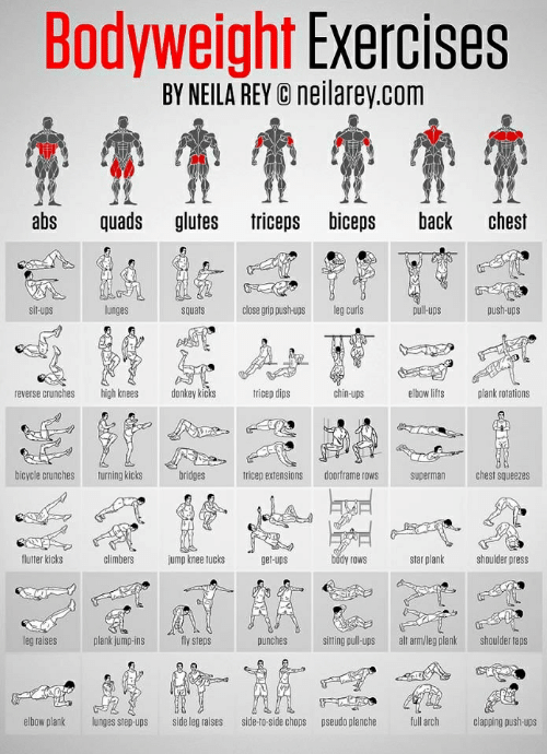 Donkey, Rey, and Superman: Bodyweight Exercises  BY NEILA REY C neilarey.com  abs quads glutes triceps biceps back chest  unges  souats  dloce geg curls  lupspush-ups  reverse crunches  high knees  donkey kicks  tricep dips  chin-ups  elbow lifts  plank rotations  bicvcle crunchesturning kicks  tricep extensions doorframeows superman  chest squeezes  flutter kicks  climbers  jump knee tucks  get-ups  body rows  star plank hlder press  leg raises  plank jump-ins  fly steps  punches  sitting pull-ups alt arm/leg plank shoulder taps  elbow plank  lunges step-ups  side leg raises  side-to-side chops  pseudo planche  full arch  clapping push-ups