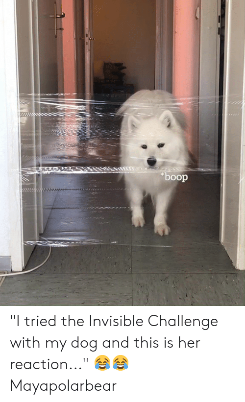 """Dank, Boop, and 🤖: boop """"I tried the Invisible Challenge with my dog and this is her reaction..."""" 😂😂  Mayapolarbear"""