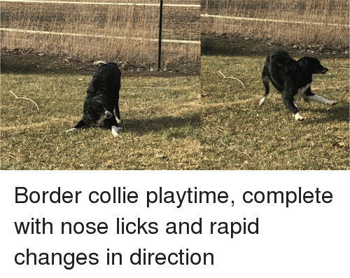 With you border collie lick puppy remarkable words