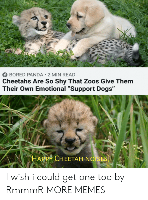 """Bored, Dank, and Dogs: BORED PANDA 2 MIN READ  Cheetahs Are So Shy That Zoos Give Them  Their Own Emotional """"Support Dogs""""  THAPPY CHEETAH NOISES] I wish i could get one too by RmmmR MORE MEMES"""