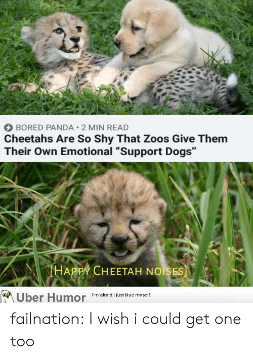 """Bored, Dogs, and Tumblr: BORED PANDA 2 MIN READ  Cheetahs Are So Shy That Zoos Give Them  Their Own Emotional """"Support Dogs""""  THAPPY CHEETAH NOISES  Uber Humor  I'm afraid I just blue myself. failnation:  I wish i could get one too"""