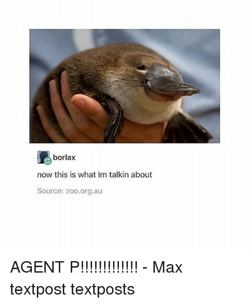 Memes, 🤖, and Zoo: borlax  now this is what Im talkin about  Source: zoo.org.au AGENT P!!!!!!!!!!!!! - Max textpost textposts