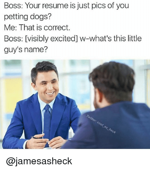 boss your resume is just pics of you petting dogs  me that
