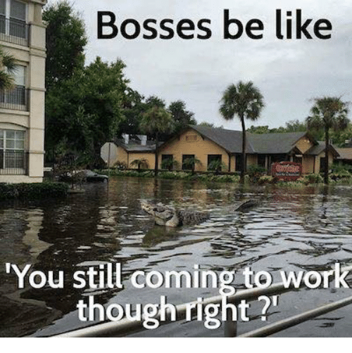 "Be Like, Dank, and Work: Bosses be like  ""You still coming to work  not"