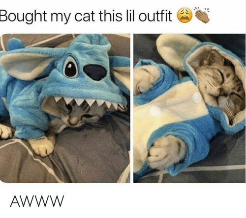 Grumpy Cat, Awww, and Cat: Bought my cat this lil outfit AWWW
