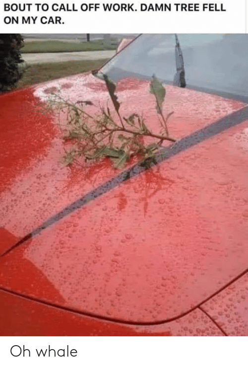 Dank, Work, and Tree: BOUT TO CALL OFF WORK. DAMN TREE FELL  ON MY CAR. Oh whale