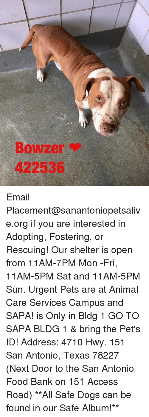 Memes, San Antonio, and 🤖: Bowzer  422536 Email Placement@sanantoniopetsalive.org if you are interested in Adopting, Fostering, or Rescuing!  Our shelter is open from 11AM-7PM Mon -Fri, 11AM-5PM Sat and 11AM-5PM Sun.  Urgent Pets are at Animal Care Services Campus and SAPA! is Only in Bldg 1 GO TO SAPA BLDG 1 & bring the Pet's ID! Address: 4710 Hwy. 151 San Antonio, Texas 78227 (Next Door to the San Antonio Food Bank on 151 Access Road)  **All Safe Dogs can be found in our Safe Album!**