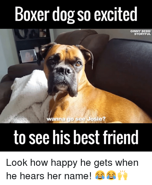 Funny Boxer Dog Meme : Boxer meme pixshark images galleries with a bite