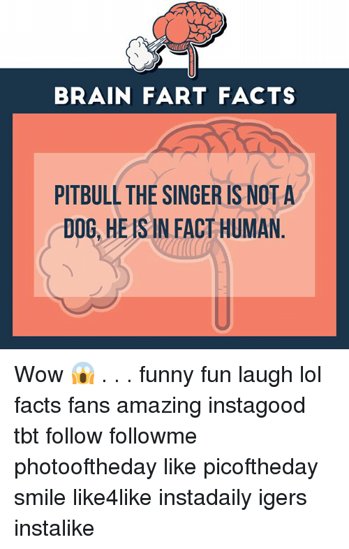 BRAIN FART FACTS PITBULL THE SINGER IS NOT a DOG HEIS IN FACT HUMAN