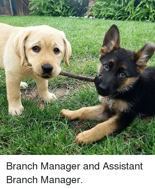 Dank, 🤖, and Manager: Branch Manager and Assistant Branch Manager.