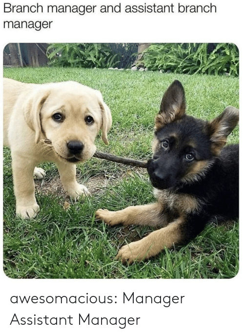 Tumblr, Blog, and Com: Branch manager and assistant branch  manager awesomacious:  Manager  Assistant Manager