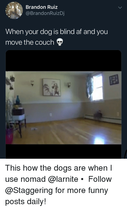 Af, Dogs, and Funny: Brandon Ruiz  @BrandonRuizDj  When your dog is blind af and you  move the couch This how the dogs are when I use nomad @larnite • ➫➫➫ Follow @Staggering for more funny posts daily!