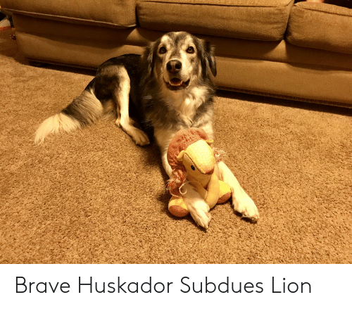 Brave, Lion, and Huskador: Brave Huskador Subdues Lion
