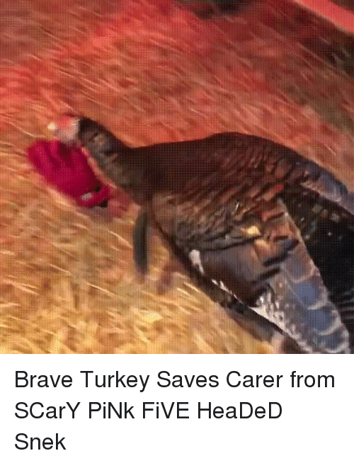 Brave, Pink, and Turkey: Brave Turkey Saves Carer from SCarY PiNk FiVE HeaDeD Snek