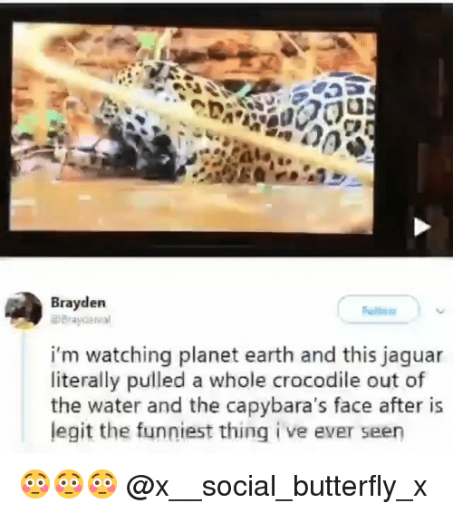 Memes, Butterfly, and Earth: Brayden  i'm watching planet earth and this jaguar  literally pulled a whole crocodile out of  the water and the capybara's face after is  legit the funniest thing i ve ever seen 😳😳😳 @x__social_butterfly_x