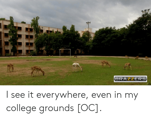BRAZZERS I See It Everywhere Even in My College Grounds OC | College