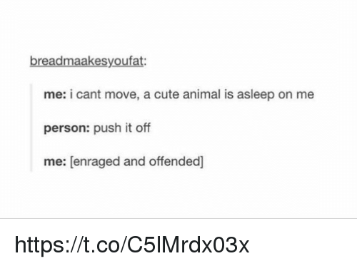 Animals, Anime, and Cute: breadmaakesyoufat:  me: i cant move, a cute animal is asleep on  me  person: push it off  me: enraged and offended] https://t.co/C5lMrdx03x