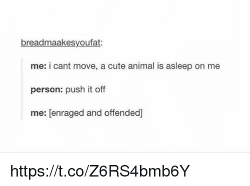 Animals, Anime, and Cute: breadmaakesyoufat:  me: i cant move, a cute animal is asleep on  me  person: push it off  me: enraged and offended] https://t.co/Z6RS4bmb6Y