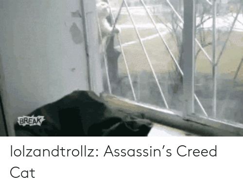 Tumblr, Assassin's Creed, and Blog: BREAK lolzandtrollz:  Assassin's Creed Cat
