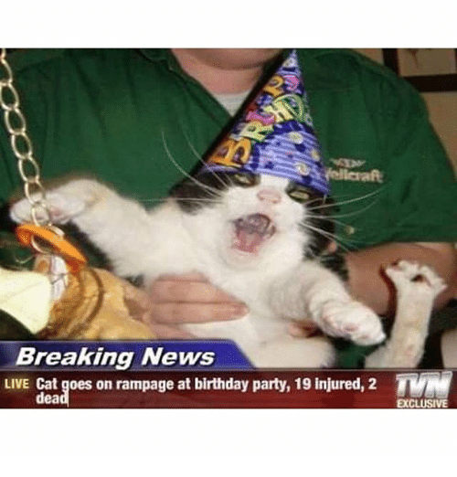 Birthday Cats And News Breaking LIVE Cat Goes On Rampage At
