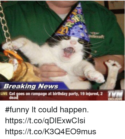 Birthday Funny And Memes Breaking News LIVE Cat Goes On Rampage At