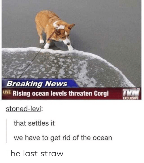 Corgi, News, and Breaking News: Breaking News  LIVE Rising ocean levels threaten Corgi T  stoned-levi  that settles it  we have to get rid of the ocean The last straw