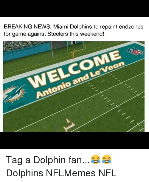 breaking news miami dolphins to repaint endzones for game against 7045636 ✅ 25 best memes about dolphin rape dolphin rape memes