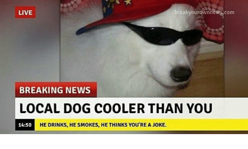 Dogs, Drinking, and News: breakyourownnews.com  LIVE  BREAKING NEWS  LOCAL DOG COOLER THAN YOU  14:50  HE DRINKS, HE SMOKES, HE THINKS YOU'RE A JOKE.
