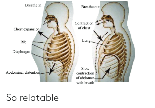 Breathe in Breathe Out Contraction of Chest Chest Expansion