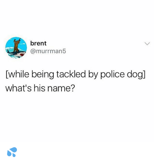 Funny, Police, and Dog: brent  @murrman5  [while being tackled by police dog]  what's his name? 💦