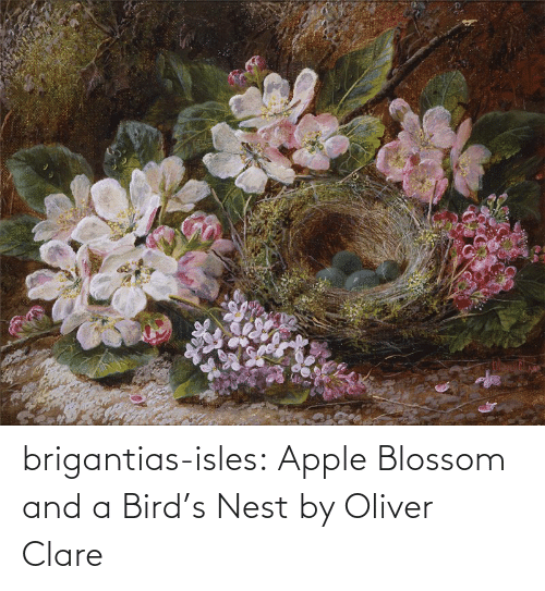 Apple, Tumblr, and Birds: brigantias-isles:    Apple Blossom and a Bird's Nest   by Oliver Clare