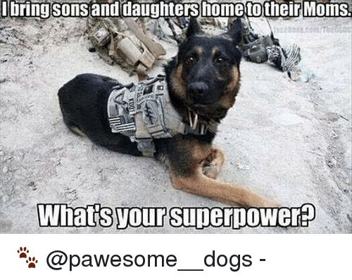 Dogs, Memes, and Moms: bring  sonsand  daughters  home  to  their  Moms  What's your Super  ower 🐾 @pawesome__dogs -