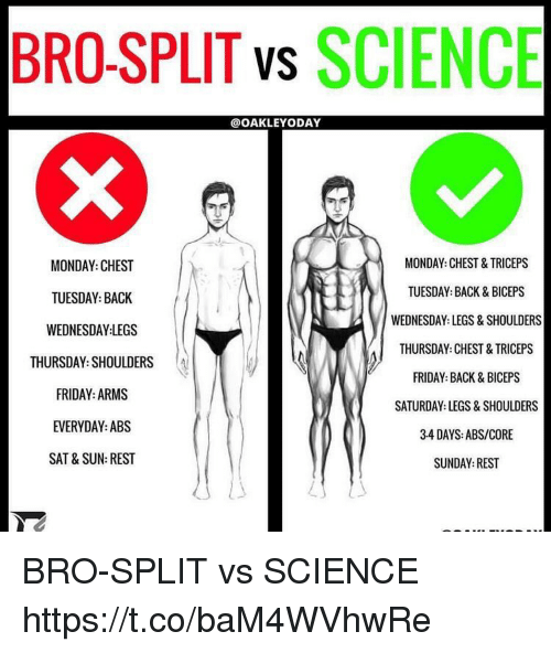 Friday, Memes, and Science: BRO-SPLIT vs SCIENCE  @OAKLEYODAY  MONDAY: CHEST&TRICEPS  TUESDAY: BACK & BICEPS  WEDNESDAY: LEGS & SHOULDERS  THURSDAY: CHEST&TRICEPS  FRIDAY: BACK& BICEPS  SATURDAY: LEGS&SHOULDERS  34 DAYS: ABS/CORE  SUNDAY: REST  MONDAY: CHEST  TUESDAY: BACK  WEDNESDAY LEGS  THURSDAY:SHOULDERSA  FRIDAY: ARMS  EVERYDAY:AB:S  SAT&SUN: REST BRO-SPLIT vs SCIENCE https://t.co/baM4WVhwRe