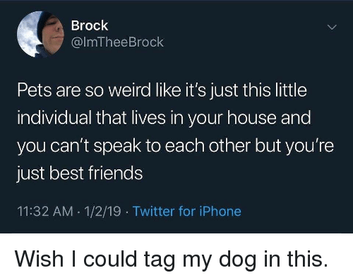 Friends, Iphone, and Memes: Brock  @lmTheeBrock  Pets are so weird like it's just this little  individual that lives in your house and  you can't speak to each other but you're  just best friends  11:32 AM 1/2/19 Twitter for iPhone Wish I could tag my dog in this.