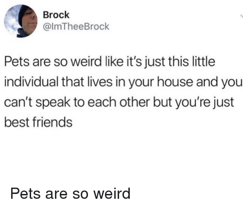 Friends, Weird, and Brock: Brock  @lmTheeBrock  Pets are so weird like it's just this little  individual that lives in your house and you  can't speak to each other but you're just  best friends Pets are so weird
