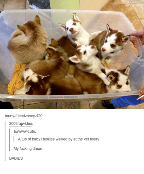 Cute, Fucking, and Fuck: brony-friendzoney-420  2003rapvideo:  awwww-cute:  A tub of baby Huskies walked by at the vet today  My fucking dream  BABIES