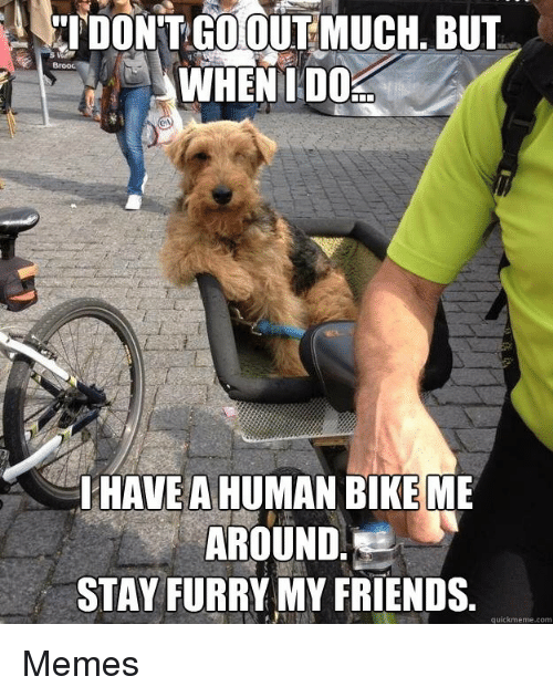 Friends, Memes, and Bike: Brooc  WHENTD0  IHAVEA HUMAN BIKE ME  AROUND  STAY FURRY MY FRIENDS.  quickmeme.com Memes