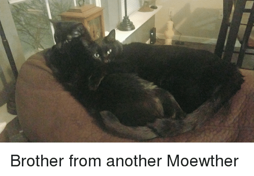 Another, Brother, and From: Brother from another Moewther